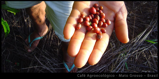 cafe-agroecologico-anna-dodesign-s